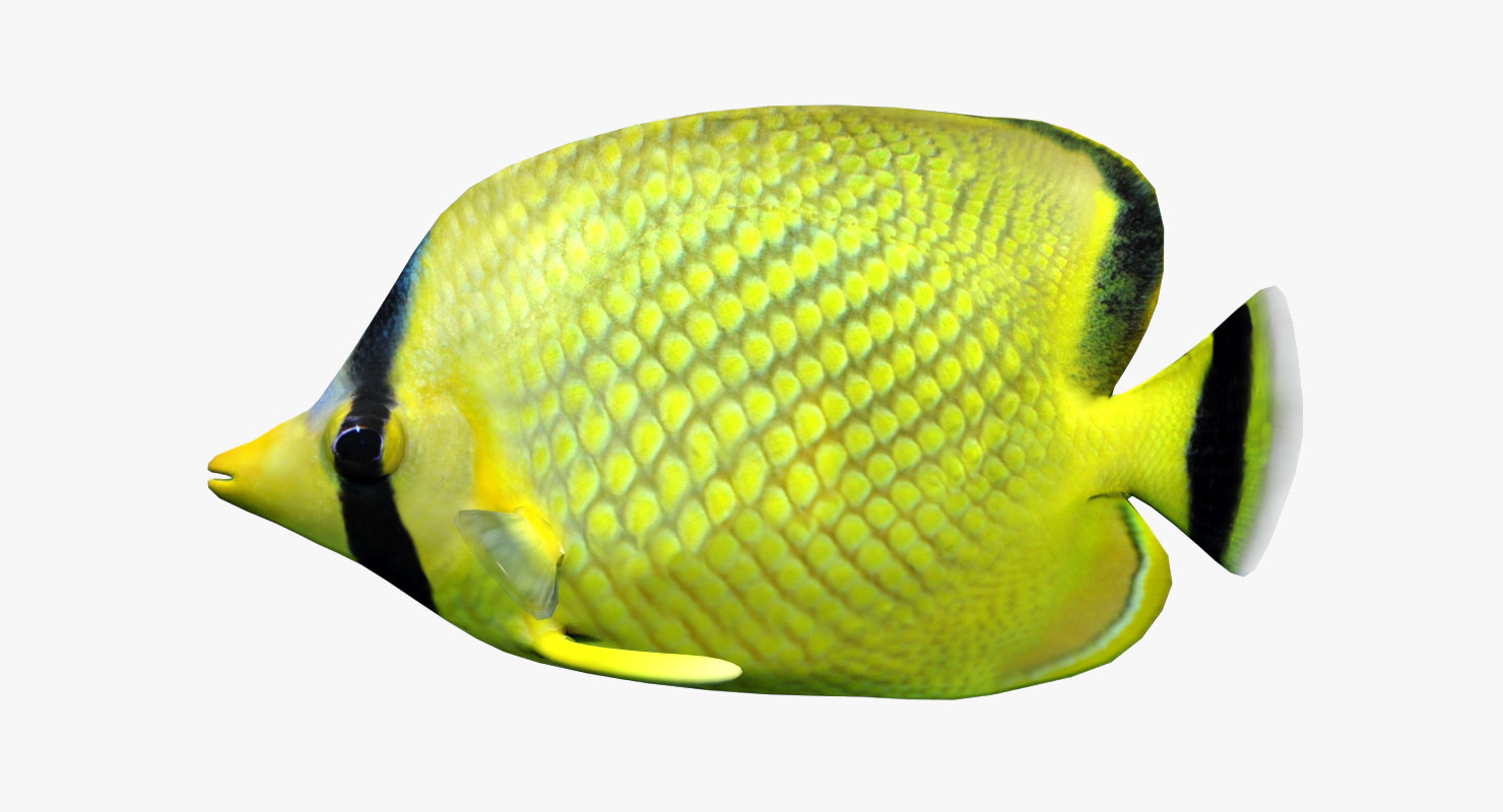 latticed butterfly fish 3d 3ds