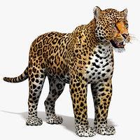 mammal animal max