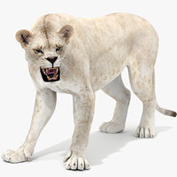 Lioness 2 (White, Rigged)