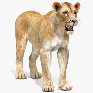 3ds lioness modeled