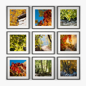3d photo wall nature model