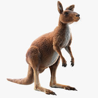 kangaroo fur model