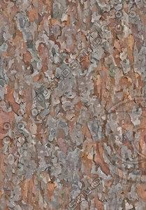 Tree Texture Pine 2