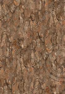Tree Texture Pine