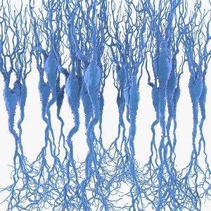 c4d pyramidal neurons