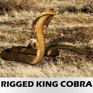 realistic king cobra snake obj