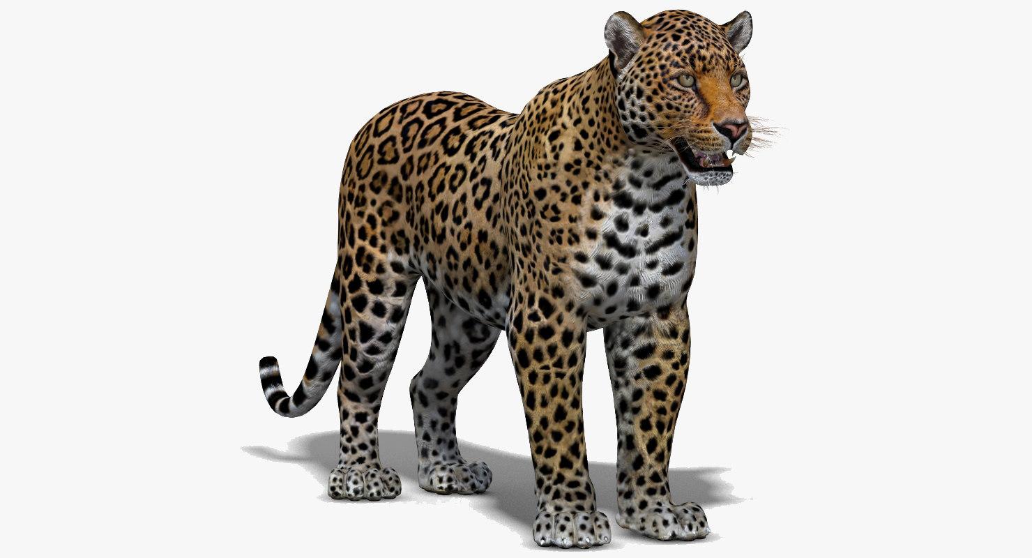 3d cat leopard feline
