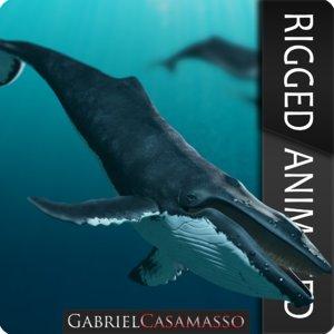 3d humpback whale megaptera novaeangliae model