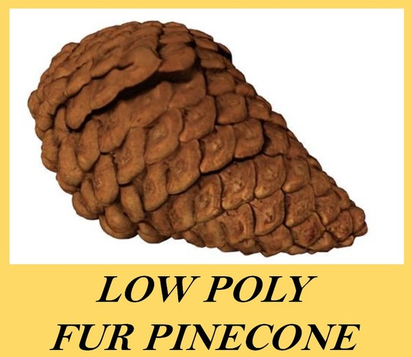 3d fir cone pinecone model