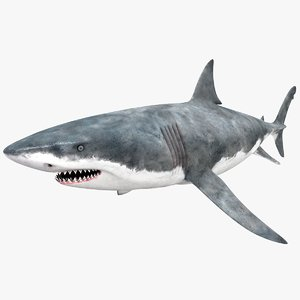 3d realistic female great white model