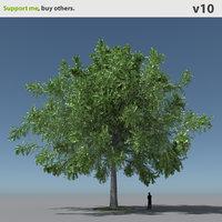 tree oak v10 max free