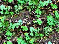 Forest ground 09