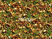 Grass with autumn leaves 07