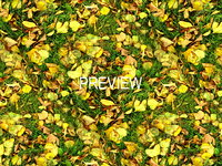 Grass with autumn leaves 14