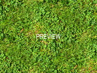 Grass with clover 05