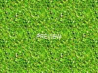 Grass with clover 08