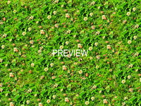 Grass with clover 16