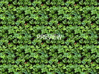 Groundcover 01