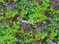 Groundcover 02