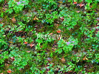 Groundcover 03