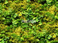 Groundcover 06