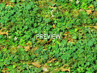 Groundcover 09