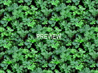 Groundcover 17