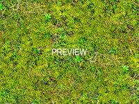 Mossy ground 04