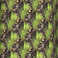 Mossy tree bark 03