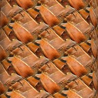 Palm tree bark 09
