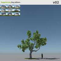 Tree Oak V2