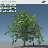 free max model tree oak v4