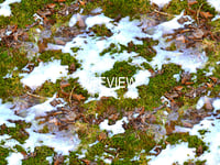 Snow on ground 01