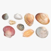 photorealistic seashells 3D model