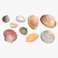 photorealistic seashells 3D model