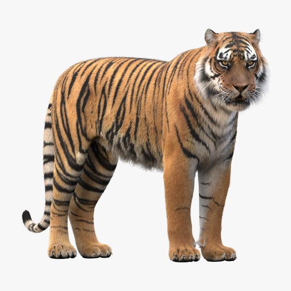 realistic rigged tiger fur 3d max