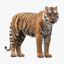 Tiger Rigged Fur