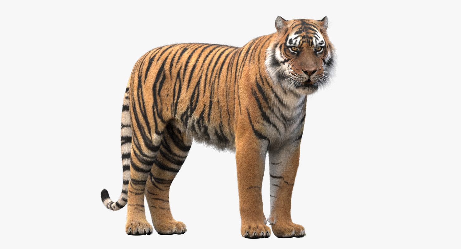realistic rigged tiger fur 3d max
