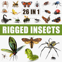 Insects Big Rigged 3D Models Collection