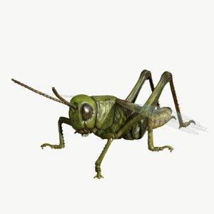 3d model grasshopper chorthippus parallelus
