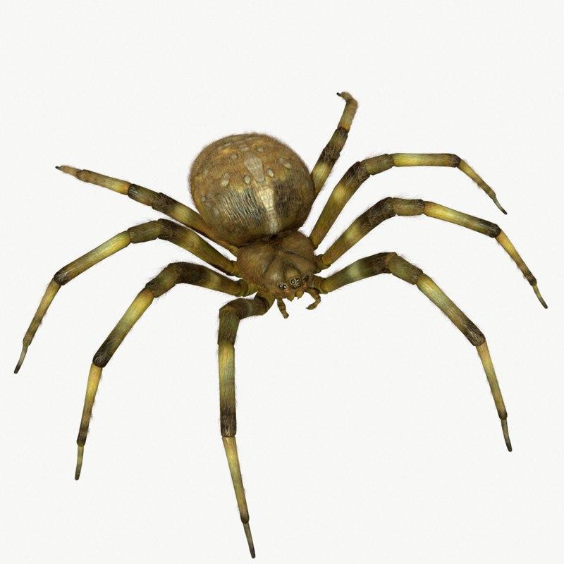 3d orb-weaver spider model