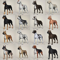 3D dogs breed model