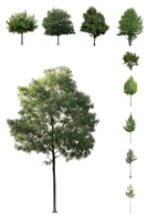 European Cutout Tree Package 01