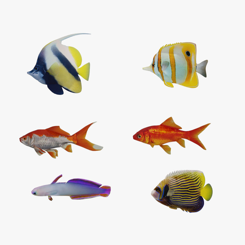fish marine tropical 3d model