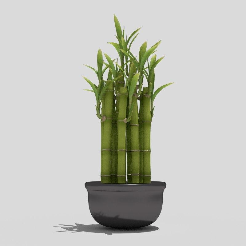 3d bamboo pot plant model