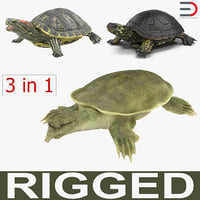 max rigged turtles 3 modeled
