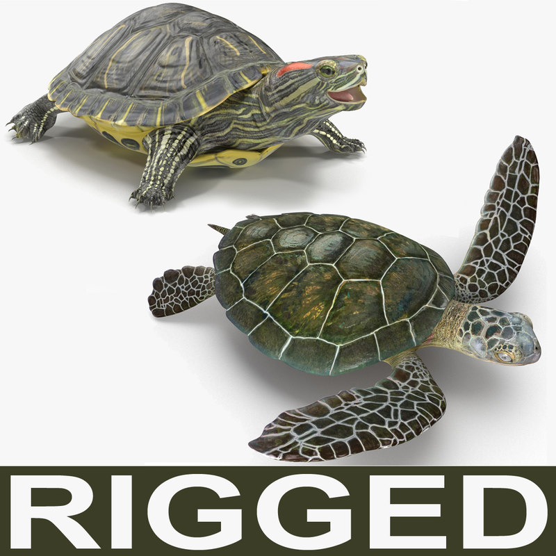 max rigged turtles modeled animate