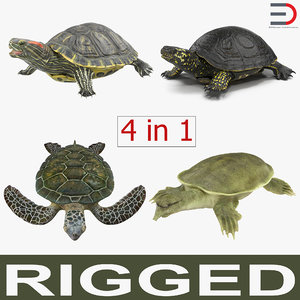 3d rigged turtles 2 modeled