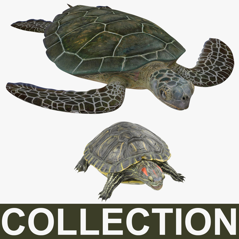 turtles modeled slider sea 3d model
