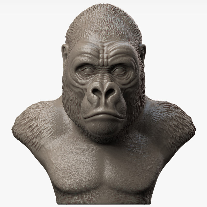 3d model gorilla head animal